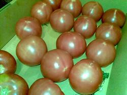 大家さん一家よりまん丸あまーいトマト