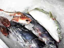 銚子産の鮮魚たち!